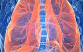 pulmoes