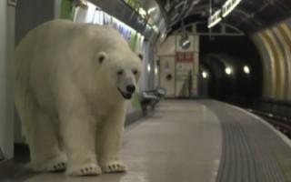 urso londres