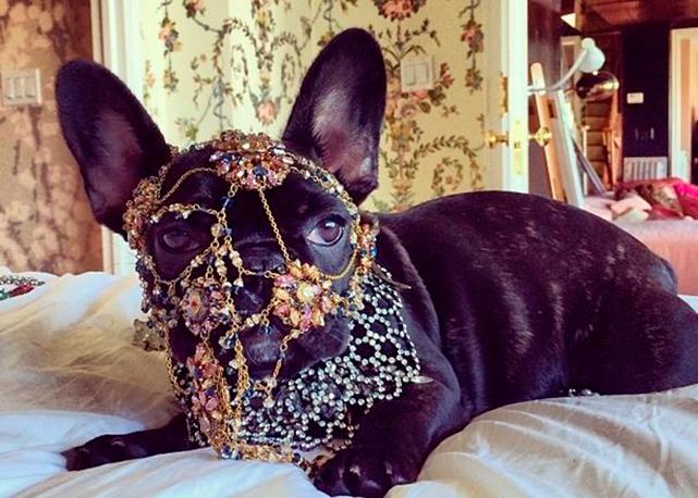 Cadela Gaga