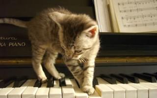 gatos musica