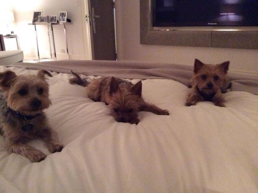 Os cães de Simon Cowell