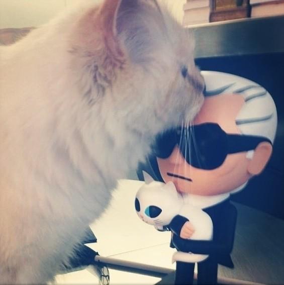 Choupette a famosa gata de Karl Lagerfeld