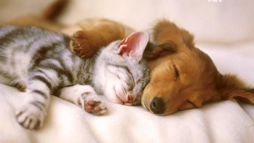 gato-e-cachorro-filhotes