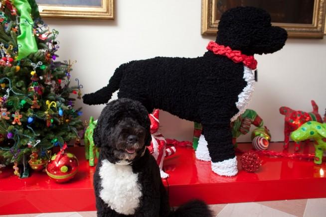 O cão da família, Bo, junto a uma réplica sua