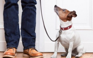 ensinar-cachorro-usar-coleira-1