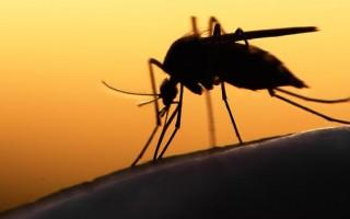 salud-viajero-en-houston-da-positivo-al-virus-del-zika-estados-unidos-salud-brasil-365126171