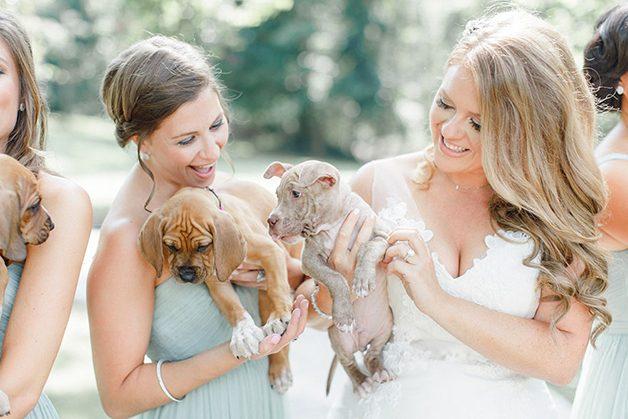 casamento-noiva-cachorrinhos-2