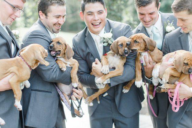 casamento-noiva-cachorrinhos-4