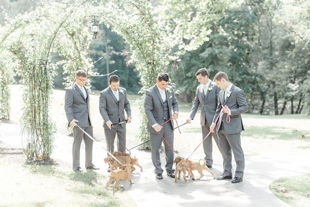 casamento-noiva-cachorrinhos-6