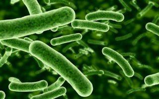 Bactéria causadora sífilis