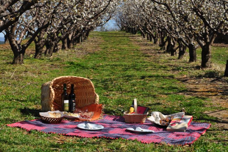 Cerejeiras em flor Fundão 2